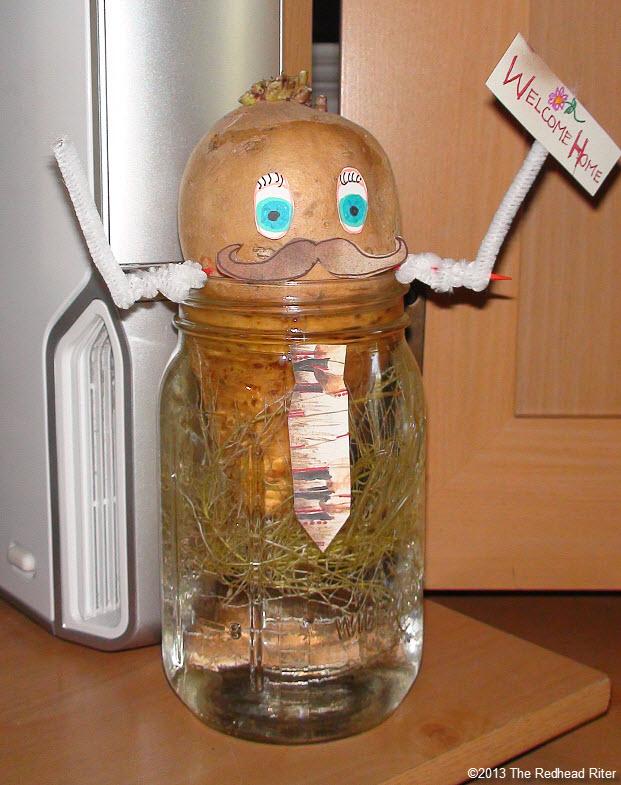 Mr Sweet Potato Head Water Roots Hydroponic